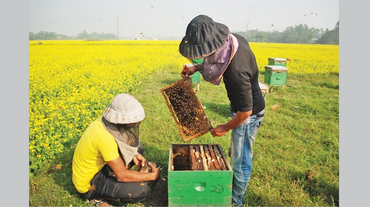 Two-day bee fair begins Sunday in capital