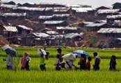 US to continue supporting Bangladesh to address Rohingya crisis