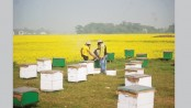 Commercial beekeeping holds bright prospects
