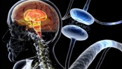Excess calcium in brain may lead to Parkinson's disease