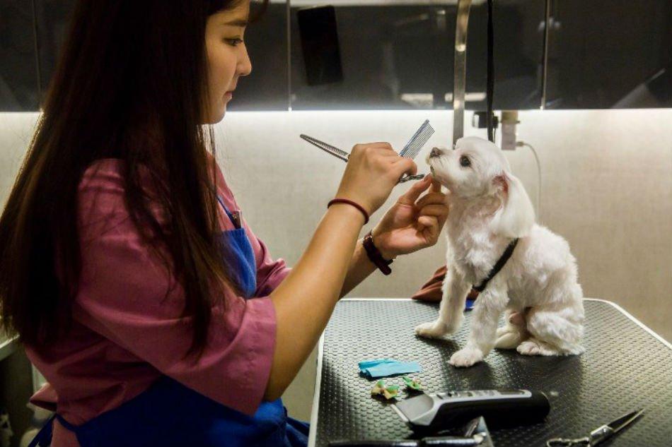 Milk spas and manicures: A Hong Kong dog's life (Photos)