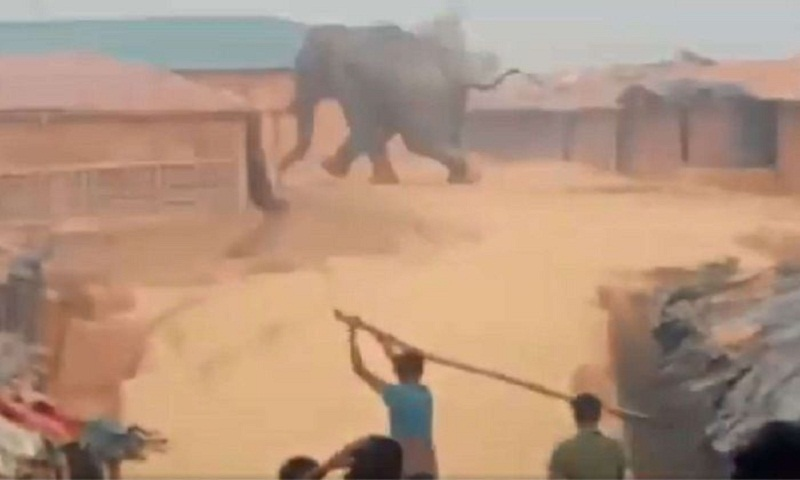 Elephant tramples Rohingya refugee camp, killing at least one child and destroying huts