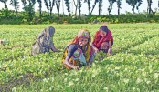 Farming crops with rocks to curb co2 emission