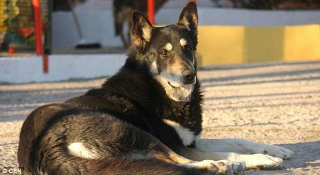 Dog who slept beside his master's grave every night for 10 years dies
