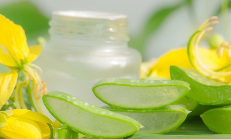 Aloe Vera: A miraculous herb