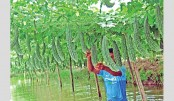 Poison-free vegetables farming on the rise in Narsingdi