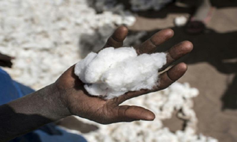 Behind Benin's cotton harvest, worries over 'monopoly'