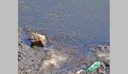 Mosquito menace grips Dhaka