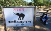 Plan launched to check human-elephant conflict in Rohingya settlement