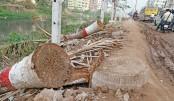 Trees cut for drain, road dev work at Banasree in capital