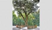 Tree helps people find love