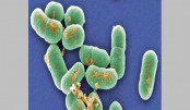 South Africa listeria: Source of 'world's worst outbreak' found