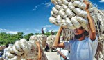Experts for pragmatic steps to revive glory of jute