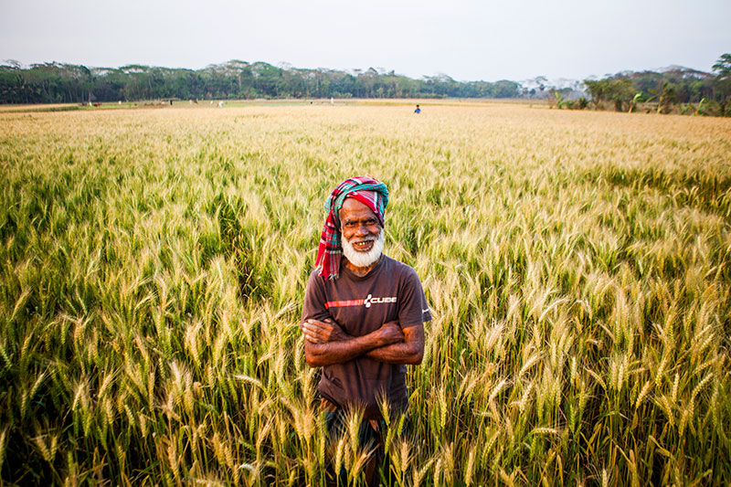 Bumper wheat production expected in Naogaon