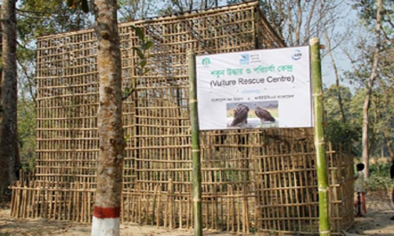 12 rescued vultures set to return to nature