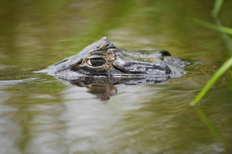 Development threatens Latin America's great Pantanal wetlands