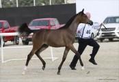 Horses in Qatar get their own 5-star resort
