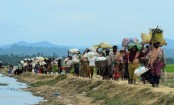 No identity cards for Rohingyas: India government