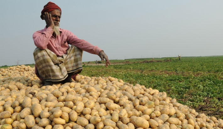 Potato growers face huge loss