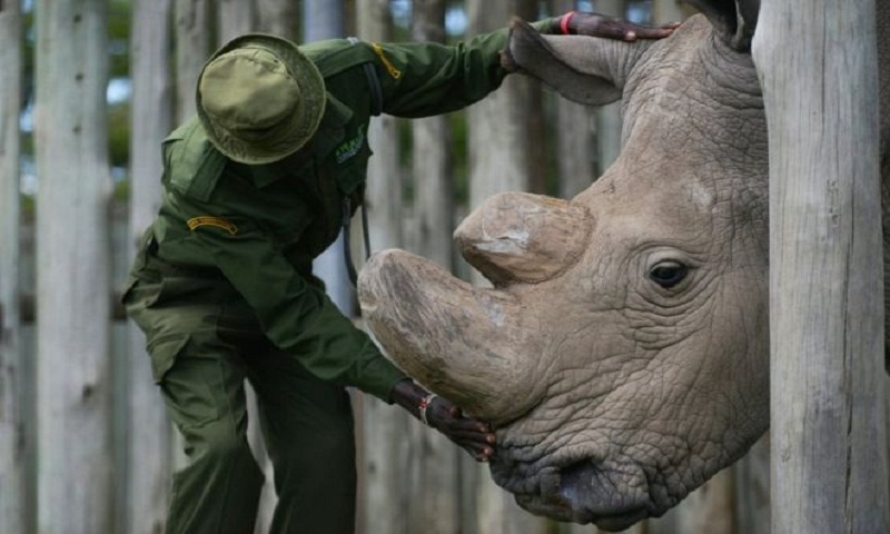 Rhino dies: Sudan was the last male northern white