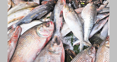 Fish production up by 12.35 lakh tonnes in 8 years