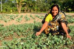 Family Farming: Better Way to Address Hunger