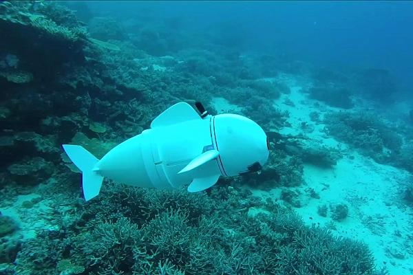 Ocean has soft robotic fish swims alongside real ones