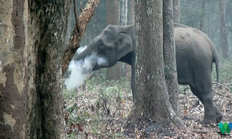 'Smoking' elephant in India baffles experts