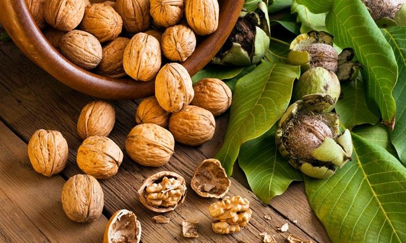 Walnut – The healthiest royal food