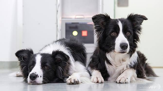 Video games may help ageing dogs stay mentally agile