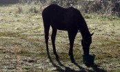 Indian lowest-caste Dalit man killed 'for owning horse'