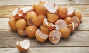 Eggs can be dangerous to health