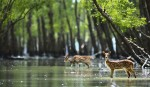 Move to create artificial mangrove forest near Sundarbans