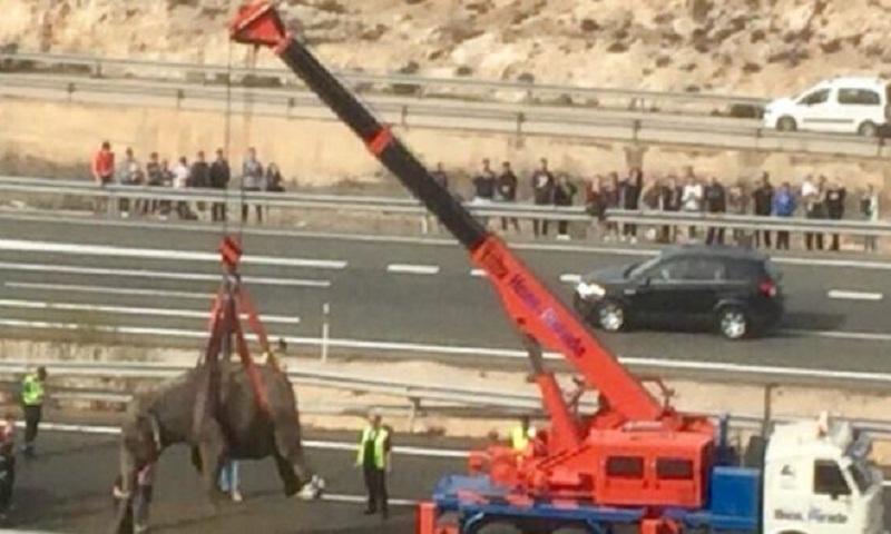 Elephants loose on motorway in Murcia, Spain