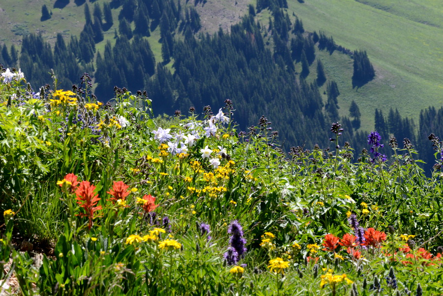 Climate change makes mountain tops bloom, for now