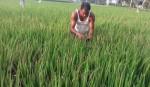 Blast may affect Boro production