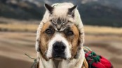 Dog and cat travel companions gain cult following