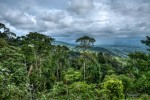 Invasions on Rainforests and Mechanism of Preservation