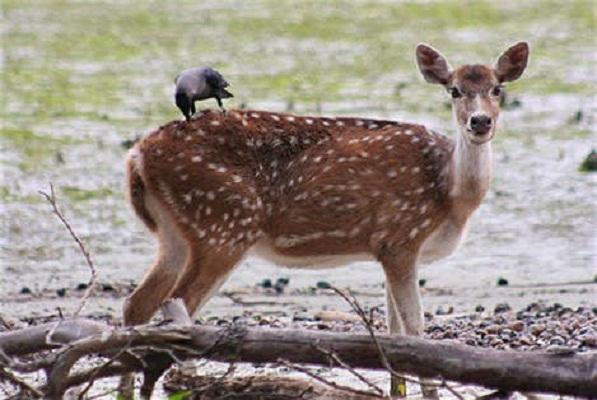Planning your Sundarbans adventure