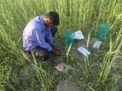 Eco-friendly rat management protects environment: specialists