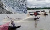 Indigenous mother carp fishes spawn huge eggs in Halda