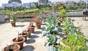 Rooftop Gardening: A Green Future For City Dwellers