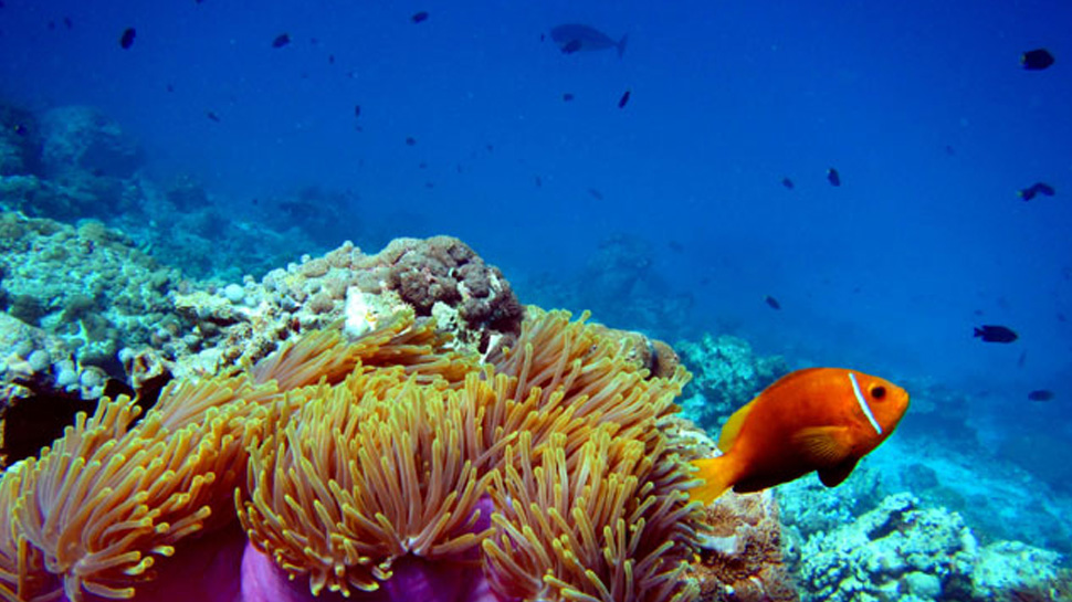 Study reveals global warming is killing the Great Barrier Reef