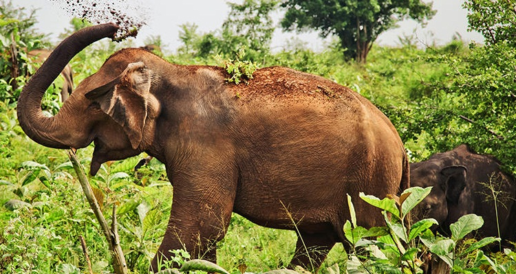 Wild elephants are in danger in Sri Lanka, 82 killed during first quarter of this year