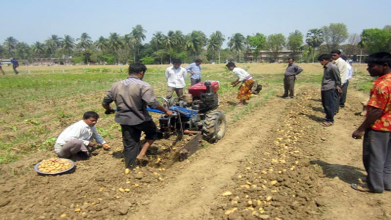Mechanized potato harvesting benefits farmers in Rajshahi