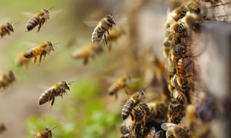 EU member states to vote on near-total neonicotinoids ban