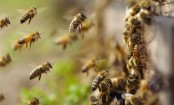 EU member states to vote on near-total neonicotinoids ban
