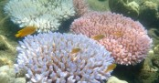 Australia pledges half a billion to restore Great Barrier Reef