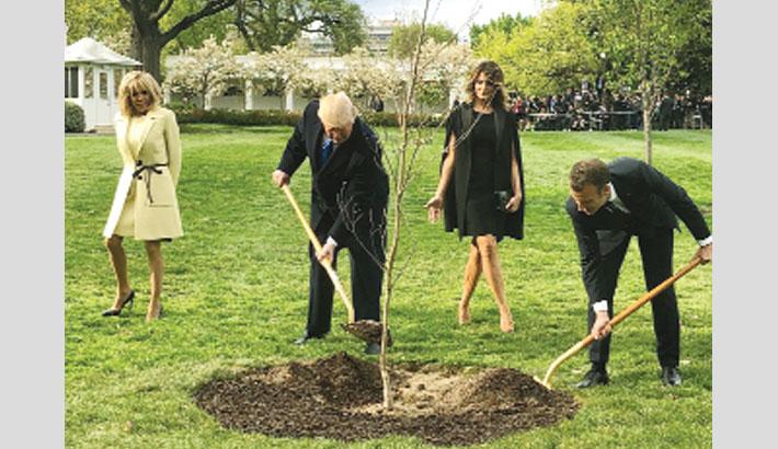 Macron's White House tree disappears