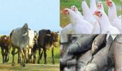 Livestock training can make women  self-reliant: Experts